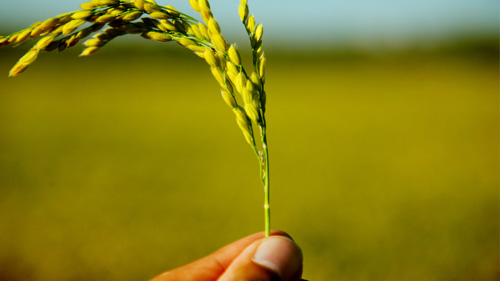 maintenance-production-alimentaire-léa-nature